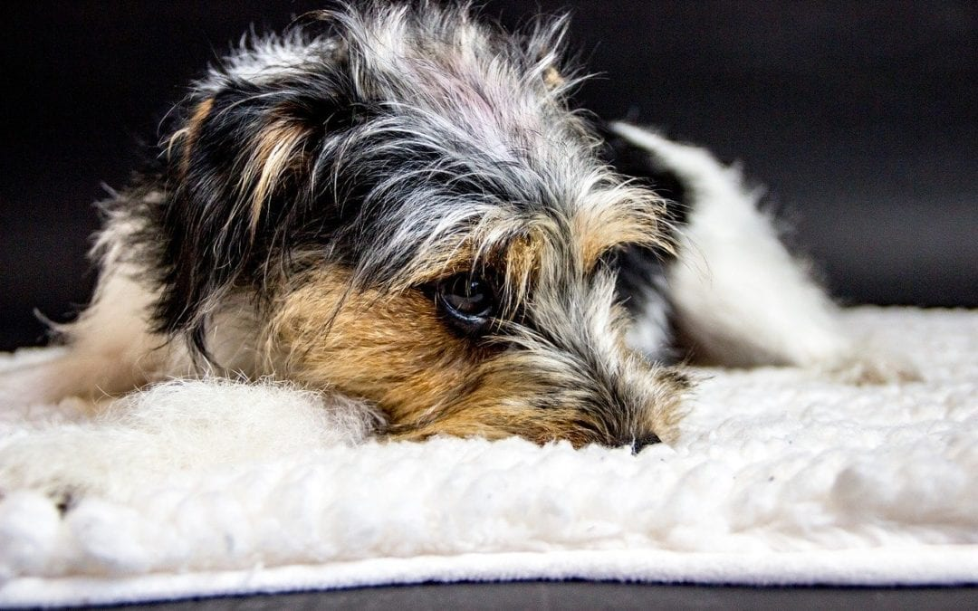 Your Pet's Emotional Well-Being