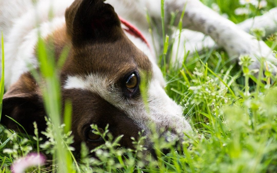 Garden Toxins Your Pet Should Avoid